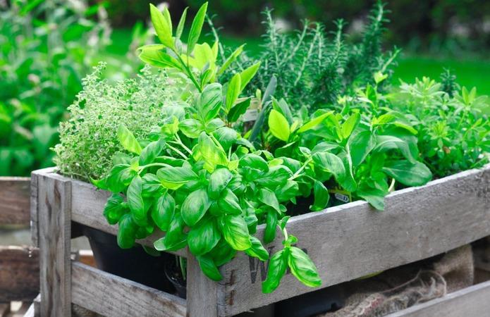Производители зелени назвали наиболее затребованные продукты
