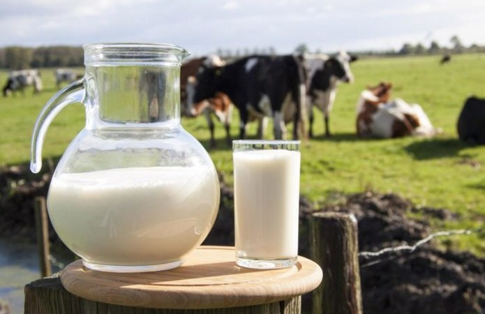 Переробники за півроку недоотримали 200 тис. т молока