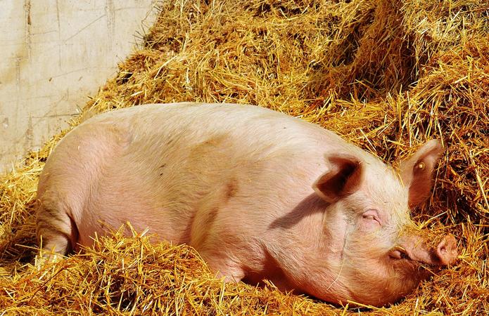 На рынке свинины начались манипуляции в связи возвращением 20% НДС